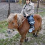 pferd2_